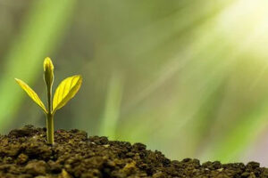 Horticulture and Agriculture  Courses in Ireland