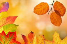 Autumn Evening Course Options for Part Time Learners
