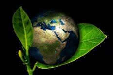 Environmental Study Courses