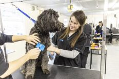 Advanced Certificate in Animal Healthcare