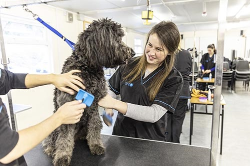 Dun Laoghaire Further Education Institute - Advanced Certificate in Animal Healthcare - 1