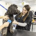Dun Laoghaire Further Education Institute - Animal Care Level 5 - 1