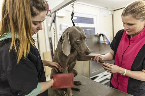 Dun Laoghaire Further Education Institute - Animal Care Level 5 - 2