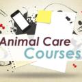 Animal Care courses in Ireland