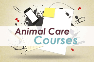 Canine and Feline First Aid Workshop